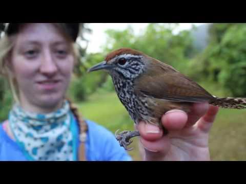 Bird conservation in Belize