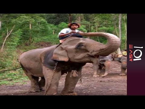 🇲🇲 Burma's Last Timber Elephants | 101 East