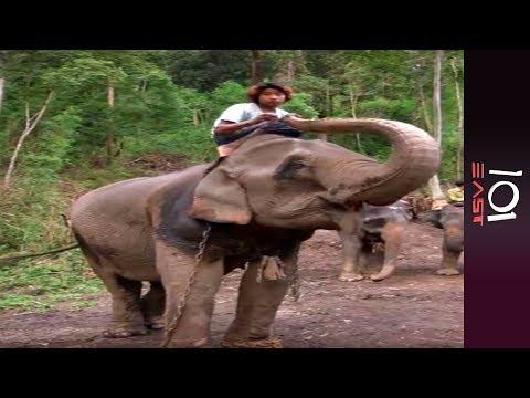 101 East - Burma's Last Timber Elephants