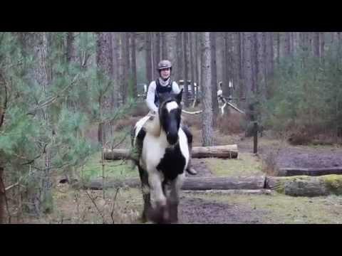 Liberté à pieds et monté sur terrain de cross forestier