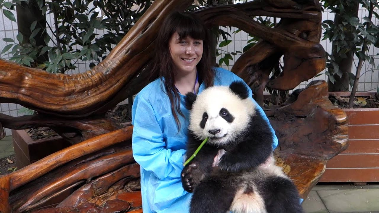 How Old Was Max Born >> Baby Panda (San Er) Holding at Chengdu Panda Research Base - YouTube