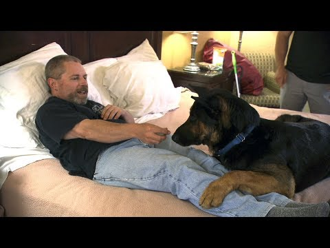 Thumbnail: Watch This Super-Dog-In-Training Learn To Wake This Man From Night Terrors