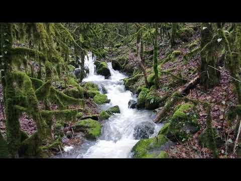 Эльфийский лес в Абхазии!)