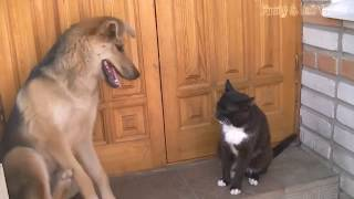 Funny Cats And Dogs Part 7   Funny Cats vs Dogs   Funny Animals Compilation
