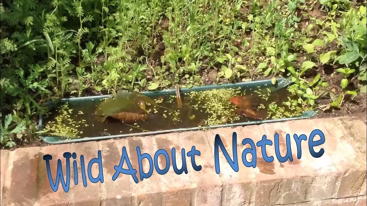 Making A Micro Wildlife Pond Ecosystem And Mini Insect