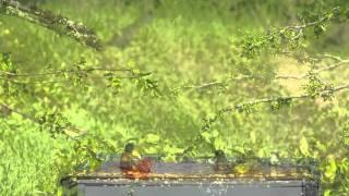 Songbird Migration Workshop - Galveston, TX