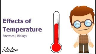 √ The Effects of Temperature on Enzymes | iitutor
