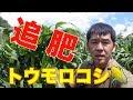 トウモロコシ追肥とアスパラ支柱なす葉面マグ散布#106