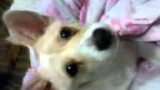 Моя собака - Пушок :3