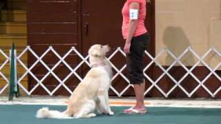 Akc Novice Obedience: Recall And Finish