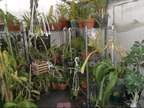 August Greenhouse Orchid Tour