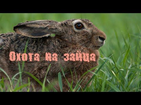 Охота на зайца. Три разных выстрела