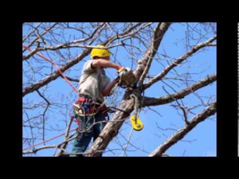 Professional Tree Service Gainesville FL | Professional Tree Company Gainesville FL