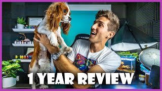 1 Year Review  Cavalier King Charles Spaniel
