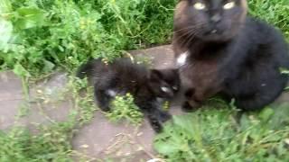 Зачем кошке нужен хвост))