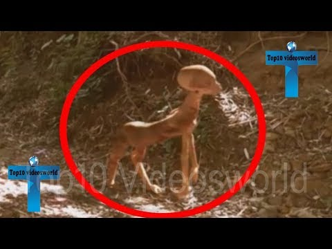 Top 10 Mysterious & Strange Things Caught On Camera - Creepy Things Caught On Tape