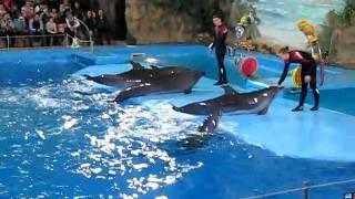 Харьковский дельфинарий, март 2011(, 2011-04-01T22:21:15.000Z)