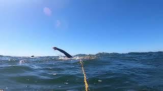 Rough Water Swim Around Avila Rock