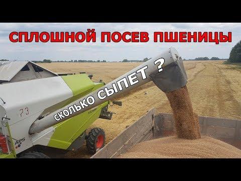 Вопрос: Вырастет ли пшеница в космосе?