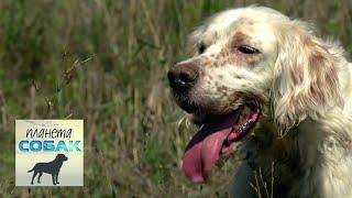 Охота за трюфелями. Планета собак 🌏 Моя Планета