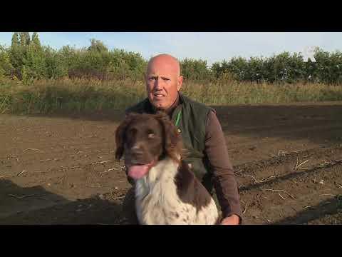 Poortugaalse jachthond gaat voor titel 'beste van Nederland'