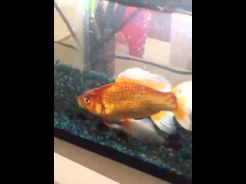 How fish sleep youtube for How do fishes sleep