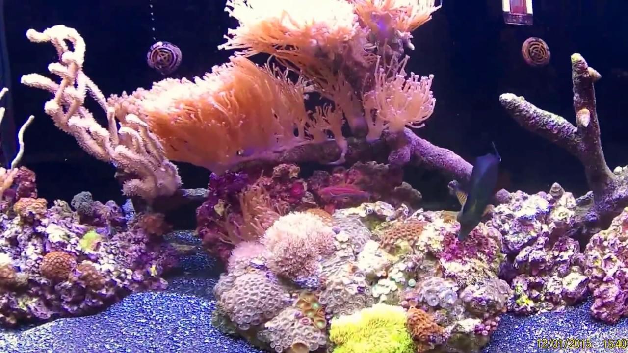 loja de aquarismo nos Estados Unidos