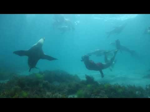 Swimming with Australian Sea Lions - Port Lincoln and Baird Bay - South Australia