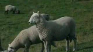 La maladie de la vache folle - MesMotsCourts culin@ires