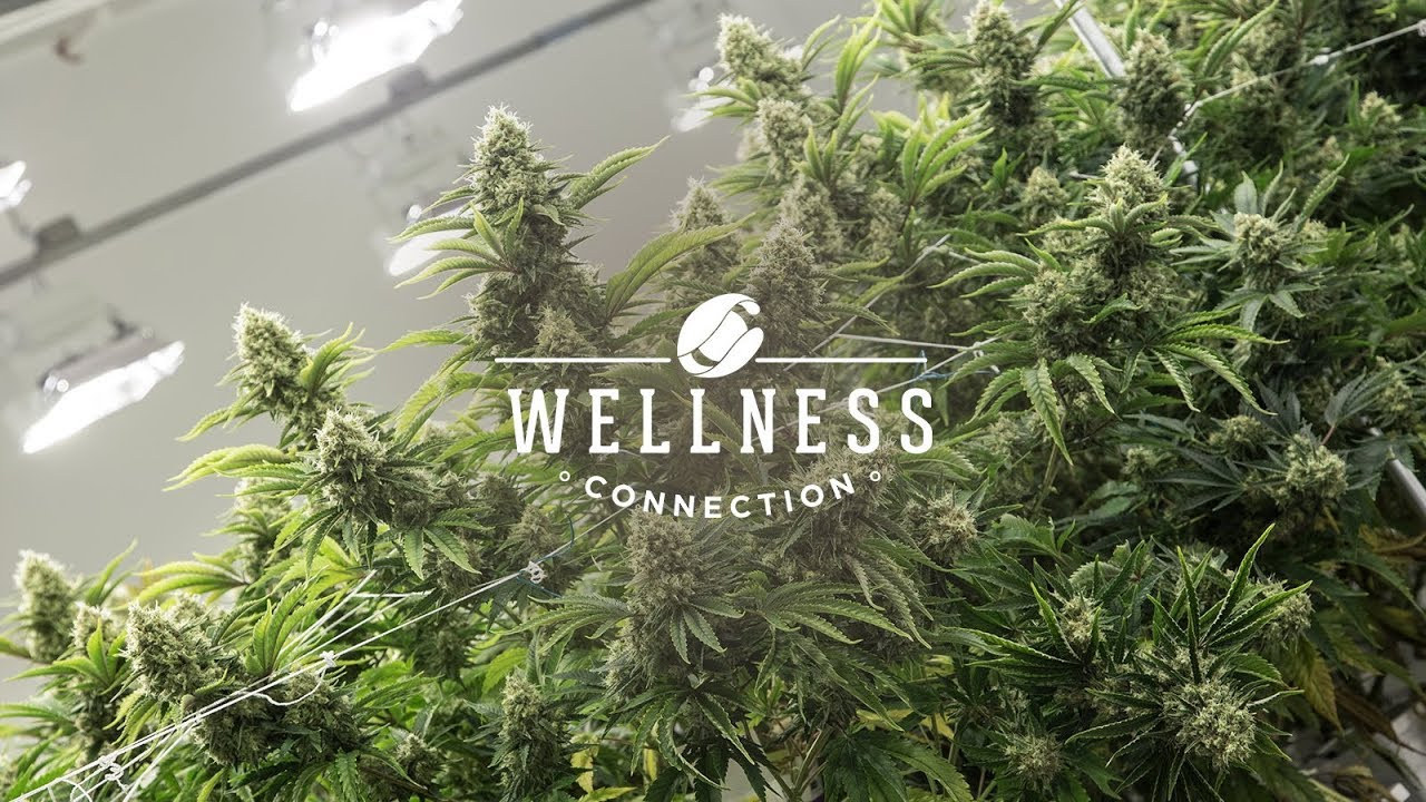 Wellness Connection - A Cannabis Dispensary Designed For You
