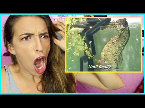 Reacting to a Seahorse Birth!