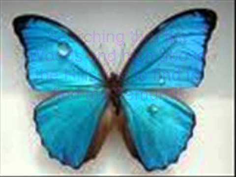 Ay ay ay, im your little Butterfly. Songtext zum mitsingen!
