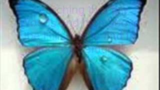 Ay ay ay, im Ihre kleine Schmetterling. Songtext zum mitsingen!