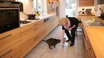 Küche für Katzenliebhaber