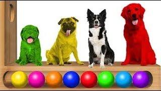 Изучаем цвета на английском языке с собакой Ксилофон смешные животные цвета видео для детей младенц