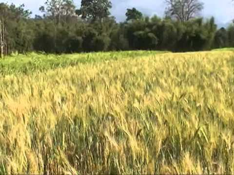 Ethiopia: Improved Agricultural Technology for Food Security and Poverty Reduction