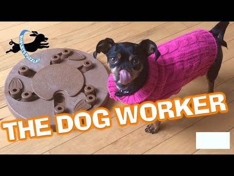 Ripley solves the dog worker puzzle in record time