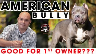 American Bully - Best Breed as Family Watch Dog | Aggressive & Strongest Puppy Dog |Baadal Bhandaari