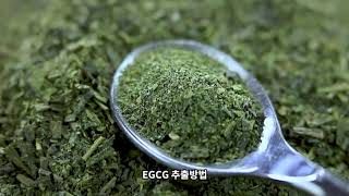 Green Tea Benefits for Your Sk…