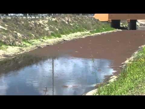 Human, Animal Waste Polluting SFL Waters