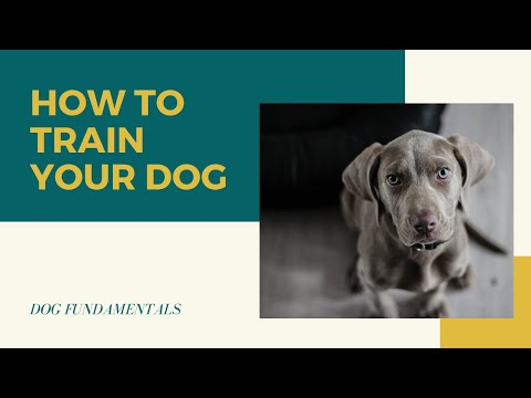 dog-training-fundamentals-|-how-to-train-your-dog