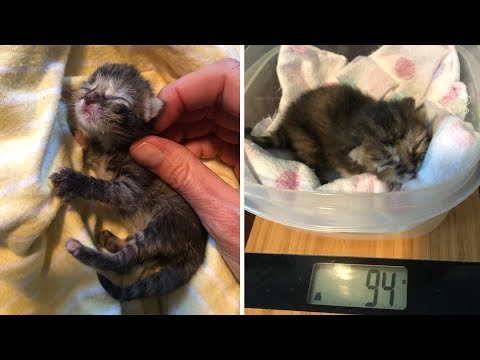 The Smallest Kitten Ever Seen with Amazing Transformation After Rescue When She Was 3 Days Old Only