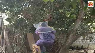 Một pha bắt ong ngu người...
