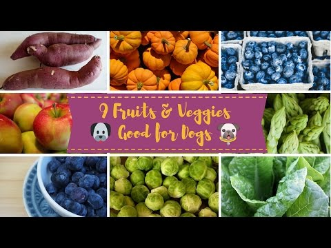 Fruits & Vegetables Good for Dogs