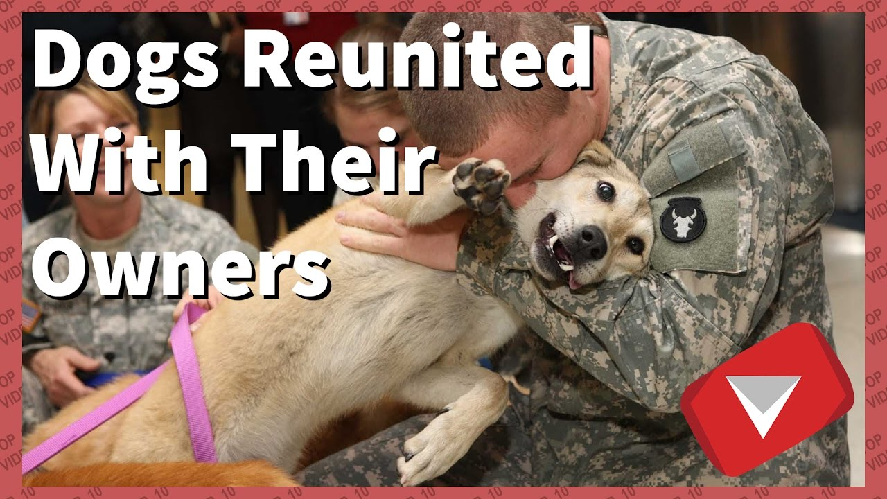 Dogs Reunited With Owners Videos