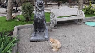 Персик возле собаки! Тайган.