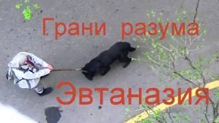 Мучают собаку ВАЖНО ЭВТАНАЗИЯ или Люди крайностей. Oxana Moscow