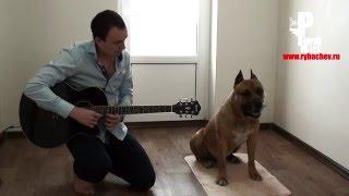 Собака с абсолютным слухом! Соседи кайфуют)) [Рыбачёв и Пёс]