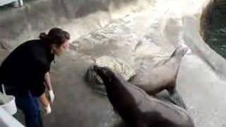 Sea Lions Show at Ocean World, Crescent City, California