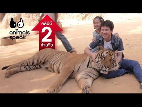 Animals Speak [by Mahidol] คนดี สู้เสือ (25 พฤษภาคม 2557)